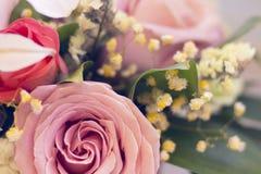 Rosas en un cierre para arriba Fotos de archivo libres de regalías