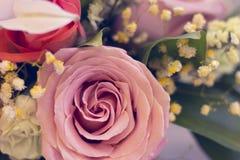 Rosas en un cierre para arriba Fotografía de archivo