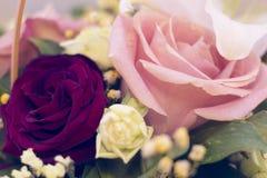 Rosas en un cierre para arriba Imagen de archivo libre de regalías