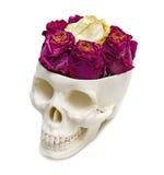 Rosas en un cráneo humano Imágenes de archivo libres de regalías