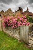 Rosas en una pared de la piedra arenisca foto de archivo libre de regalías