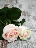 Rosas en una tabla de madera Imagenes de archivo