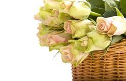 Rosas encantadoras Foto de Stock Royalty Free