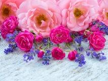 Rosas encaracolado cor-de-rosa, rosas cor-de-rosa vibrantes pequenas e alfazema de provence Imagem de Stock Royalty Free