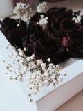 Rosas escuras Fotografia de Stock