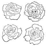 Rosas fijadas stock de ilustración