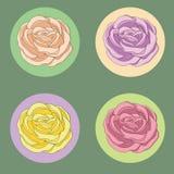 Rosas fijadas Imagen de archivo libre de regalías