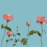 Rosas fijadas del ejemplo dibujado mano detallada Fotografía de archivo