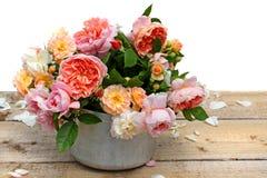 Rosas florecientes en crisol de la planta Fotos de archivo