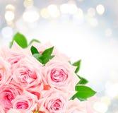 Rosas florecientes rosadas Fotografía de archivo libre de regalías