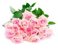 Rosas florecientes rosadas Fotos de archivo libres de regalías