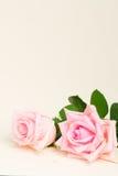 Rosas florecientes rosadas en la madera Fotos de archivo
