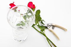 Rosas, florero y tijeras foto de archivo