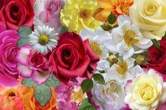 Rosas & flores fotografia de stock