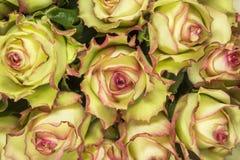 Rosas - fondo amarillo Imagen de archivo libre de regalías