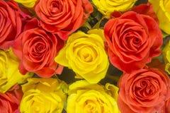Rosas - fondo amarillo Fotografía de archivo libre de regalías