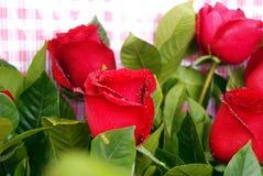 Rosas frescas Foto de archivo libre de regalías