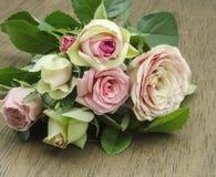Rosas frescas Foto de Stock