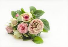 Rosas frescas Imagem de Stock Royalty Free