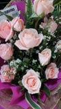 Rosas frescas do pêssego imagens de stock