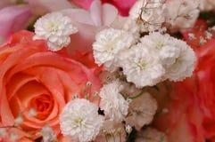 Rosas hermosas Fotografía de archivo