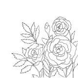 Rosas hermosas aisladas en el fondo blanco Ilustración drenada mano del vector Fotografía de archivo libre de regalías