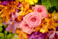 Rosas hermosas como fondo Imagen de archivo libre de regalías