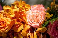 Rosas hermosas como fondo Imágenes de archivo libres de regalías