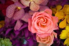 Rosas hermosas como fondo Imagenes de archivo