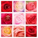Rosas hermosas del collage Imagenes de archivo