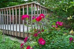 Rosas hermosas en el jardín Imagen de archivo libre de regalías