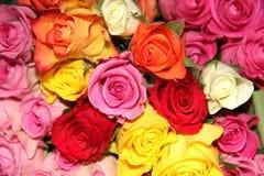 Rosas II Fotografía de archivo