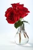 Rosas III Imagen de archivo