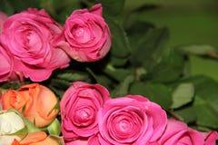 Rosas III Imagenes de archivo