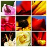 Rosas, lirios y flores de la orquídea Fotografía de archivo
