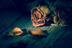 Rosas marchitadas imágenes de archivo libres de regalías