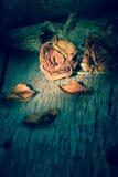 Rosas marchitadas fotografía de archivo libre de regalías