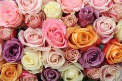Rosas en colores pastel mezcladas Imagen de archivo libre de regalías