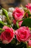 Rosas miniatura en ramo Imagen de archivo libre de regalías