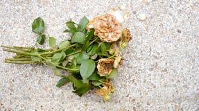 Rosas muertas Fotografía de archivo libre de regalías