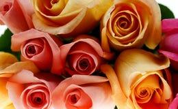 Rosas Multi-colored fotografia de stock royalty free