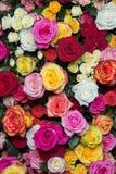 Rosas multicoloras 2 fotografía de archivo libre de regalías
