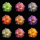 Rosas Multicoloured imagem de stock