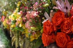 Rosas na flor Fotografia de Stock
