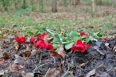 Rosas na floresta Imagens de Stock