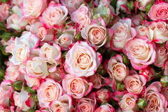 Rosas na loja imagem de stock royalty free