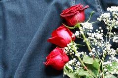 Rosas na sarja de Nimes Foto de Stock Royalty Free