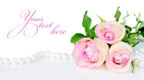 Rosas nas gotas do orvalho Imagens de Stock