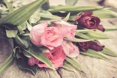 Rosas no estilo do vintage Imagens de Stock Royalty Free
