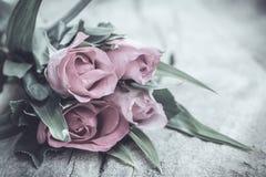 Rosas no estilo do vintage Fotos de Stock Royalty Free